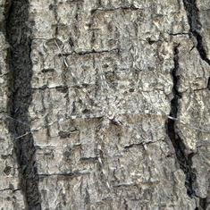 Hiding in plain sight: How city insects have mastered the art of camouflage