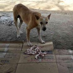 Maharashtra: At least 90 dogs found dead on a road in Buldhana district