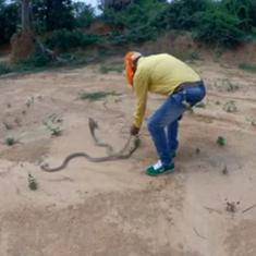 World Snake Day: Watch a rescued cobra being released into the wild