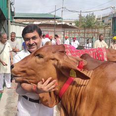 Interview: Meet India's top cow official. He wants to start cow tours, cow lectures, cow hostels