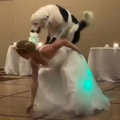 Watch: Dog trainer Sara Carson's wedding dance with her dog is outstanding
