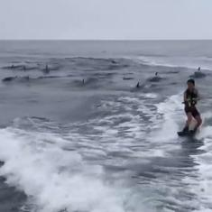 Watch: A US family went out for a casual Sunday boat ride but ended up spotting dozens of dolphins