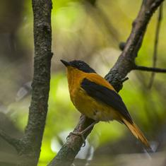 A forest in the Western Ghats is helping scientists understand how malaria spreads in birds