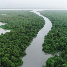 Eco India: Over 1,000 hectares of Mumbai's mangroves are fiercely guarded by a fishing community