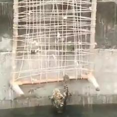 Watch: Forest Department officials rescue a leopard from a deep well in Buldhana, Maharashtra