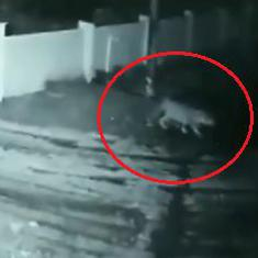 Watch: Leopard enters a house in Karnataka, escapes with pet