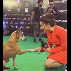 Watch: A dog was 'interviewed' at the 2019 IIFA awards ceremony