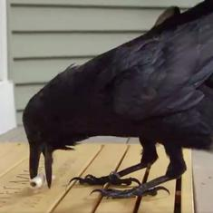 Watch: Ravens deliver the invitations to George RR Martin's literary event in this promotional video