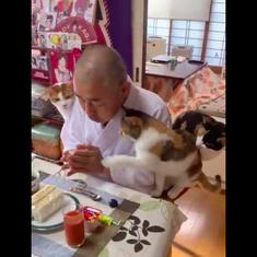 Watch: Four cats join this Japanese priest for breakfast