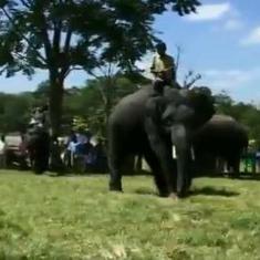 Watch: Elephants play football at a camp in Karnataka