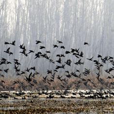 Amid tree-felling and land acquisition, an NGT order will protect 125 acres of wetlands in Kashmir