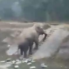 Watch: This video of an elephant climbing a narrow staircase has gone viral on social media
