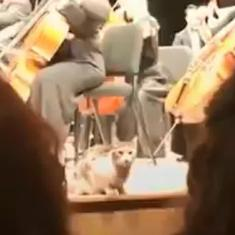 Watch: Cat crashes classical music concert in Istanbul, Turkey