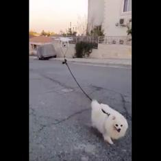 Watch: A person in Israel used a drone to walk his dog (and it works)