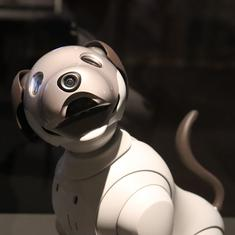 Robot pets have become tools of elderly care – but they raise crucial privacy concerns