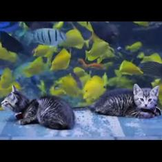 Lockdown: Foster home kittens explore aquarium, an event impossible in normal times