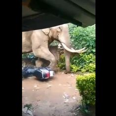 Watch: Huge elephant walks delicately past scooter lying in its path to avoid mangling it