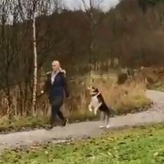 Watch: Is this jumping pet the 'world's happiest dog'?
