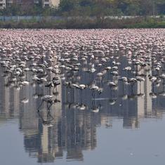 India's environment ministry has hit the brakes on Mumbai's Rs 364-crore marina project