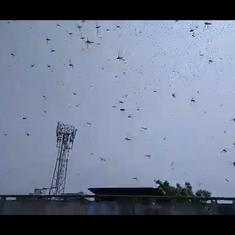 Watch: Scenes of a swarm of locusts flying around in Uttar Pradesh's Prayagraj district