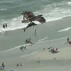 Watch: A bird picks up a large fish from the ocean and flies around with it