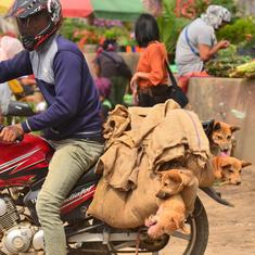 With dog meat ban, India is still trying to 'civilise' the Nagas