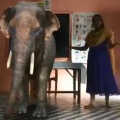 The elephant in the classroom: Augmented reality powers online classes in this Kerala school