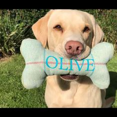 Watch: Commentator Andrew Cotter's viral labrador duo Olive and Mabel face charges of soft toy theft