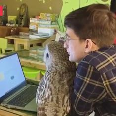 Watch: Owls act like cats in this Russian 'Owl Cafe' reminiscent of the Harry Potter world