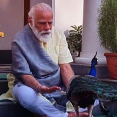 Watch: Prime Minister Narendra Modi feeds peacocks at his New Delhi residence