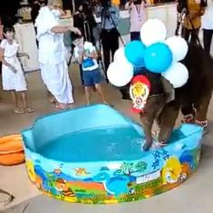 Watch: Baby elephant would rather play with water during naming ceremony in temple