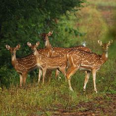 A nature reserve in Madhya Pradesh is under threat from a tiger safari and other projects