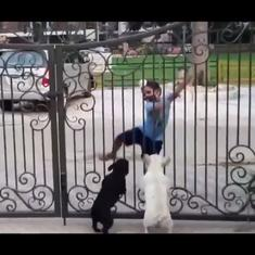Watch: Jumping puppies try to copy young boy's bhangra moves