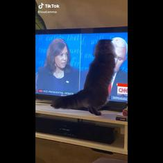 Watch: Cat watching Harris-Pence debate on TV tries to catch fly on Mike Pence's head