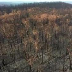 Watch: Here's how the WWF is planning to regenerate Australian bushland destroyed by wildfires