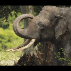 Watch this elaborate elephant congregation in the idyllic Kala Wewa national park, Sri Lanka