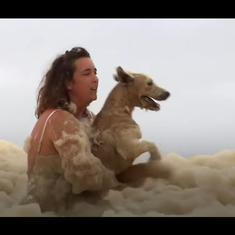 Watch: Loveable dog rescued from under a sea of foam during Australia's storms