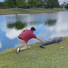 Watch: Man picks up golf ball that had landed on the tail of an alligator (and gets away with it)