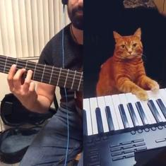 Watch: Guitarist 'collaborates' with a cat playing the keyboard on this melodic track