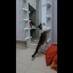 Watch: Cat is puzzled at seeing own reflection, goes looking for another cat behind the mirror