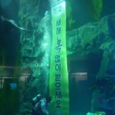 Watch: Scuba divers greet visitors in the new year at Lotte World Aquarium in Seoul, South Korea