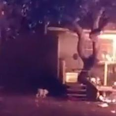 Caught on camera: Police officer rescues dogs from near a burning house in Florida, United States