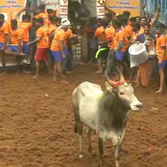 Watch: Jallikattu is resumed in parts of Tamil Nadu despite Covid-19