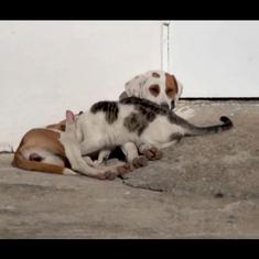 Watch: Meet Sanny the dog, who went from chasing cats to nursing them