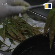 Watch: Thai hospital serves food with cannabis, from 'happy' salads to deep-fried marijuana leaves