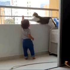 Watch: Cat, (fearing an accident?), stops child from grabbing balcony railing