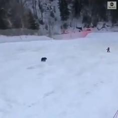Caught on camera: Skier is chased by wild bear, drops backpack in the snow