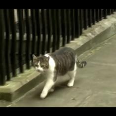 Watch: Larry the Cat marks a decade in power as UK's 'chief mouser' at 10 Downing Street