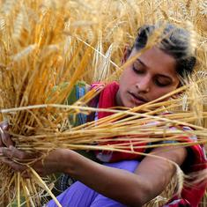Government hikes MSP for wheat by Rs 40 to Rs 2,015 per quintal