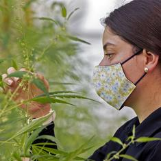 Thanks to Covid-19, home growers of cannabis have taken over a share of the market from drug dealers